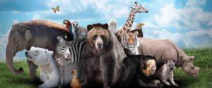 фотопечать животные