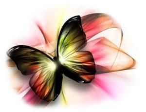 бабочки фотопечать