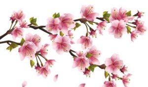 цветы фотопечать